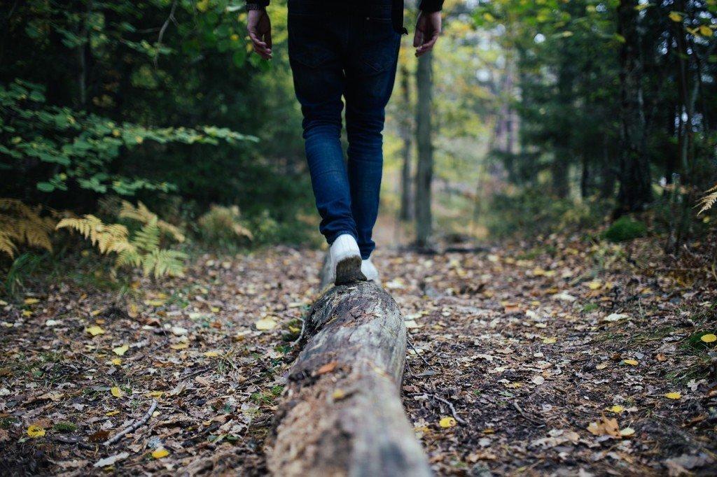 Wood exploring