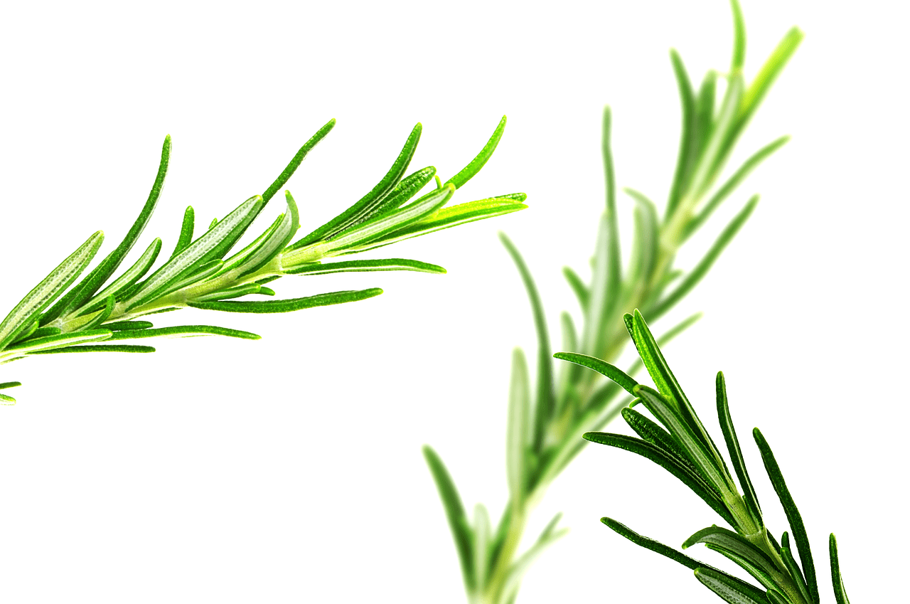 The benefits of rosemary tea