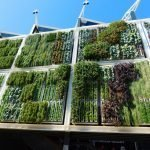How to Start a Vertical Garden Project