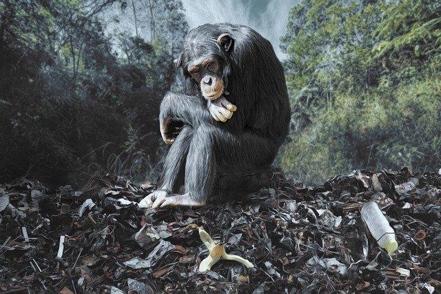 Monkey Plastic
