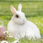 Easter Activities, Facts and Gifts 2019