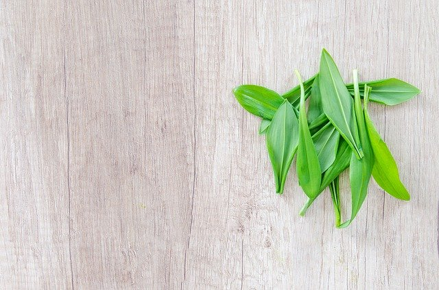 Wild Garlic: Where to find it and what you can do with it