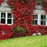 How to Make Your Home Feel Autumnal