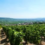 Bucket List Travel – the capital of Champagne