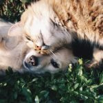 5 ways to care for your pet when you're going away