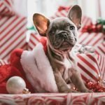 5 Ways You Can Reduce Your Environmental Impact this Christmas