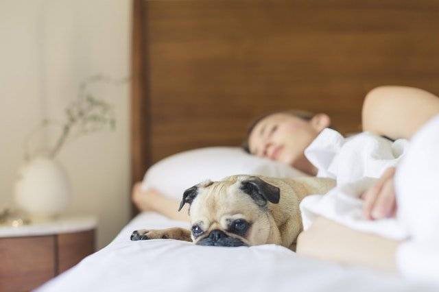 Food and Drink To Avoid Before Bedtime For A Better  Nights' Sleep