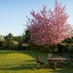 Garden: How to care for your wooden garden furniture