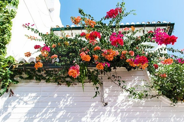 In the Home: Plants and Flowers That Are Easy to Take Care Of