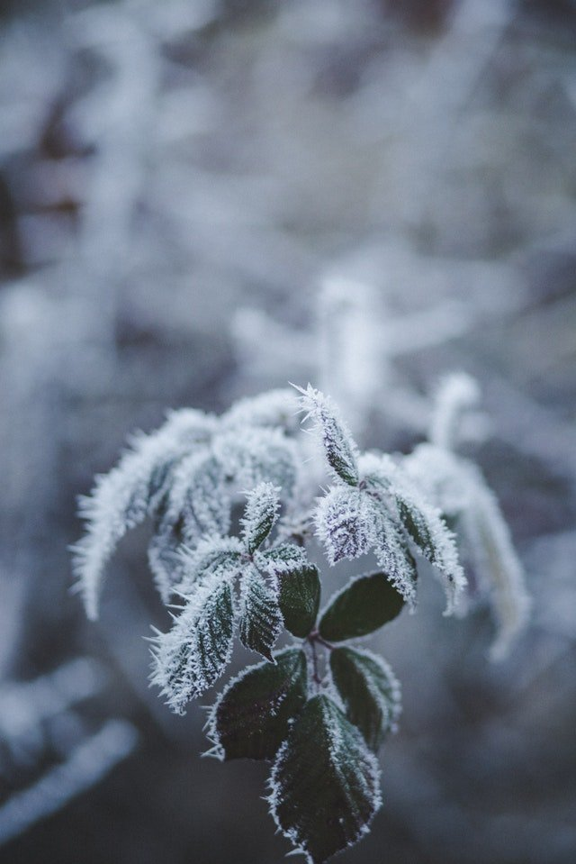 Protect from Garden frost