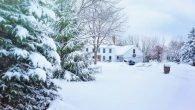 Winter garden tips
