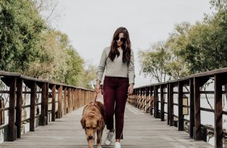 Walking the dog improves health