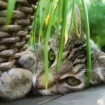 Pet Friendly Houseplants That Are Air Purifying